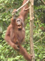 Why travel to Borneo?