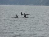 Orca viewing in Alaska anyone(video)?