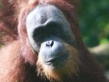 Borneo Family Adventure andSafari