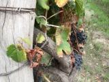 Malbec Wine tasting in Mendoza,Argentina