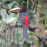 Ecuador:Bird watching in Mindo