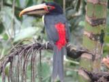Ecuador:Bird watching inMindo