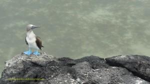 Galapagos Islands wildlife