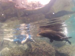 Swim with sea lions