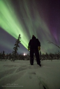 Northern lights tours, Alaska
