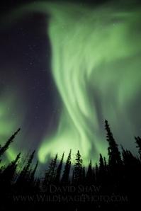 Northern lights photos by David Shaw