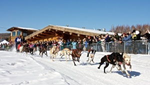 Alaska dog mushing tours