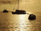 Bottlenose dolphins surround us at sunset in theGalapagos