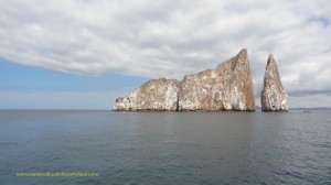 This is a great place to swim with Galapagos sharks