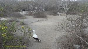 Galapagos Islands birding