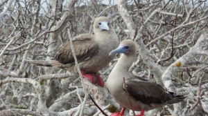 galapagos islands tours and travel bird watching