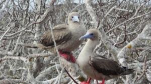 galapagos islands tours and travel bird watching