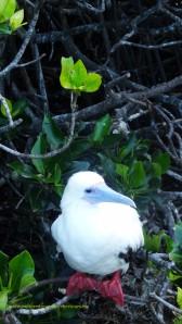 Genovesa Island, Galapagos is the best island for birding Galapagos