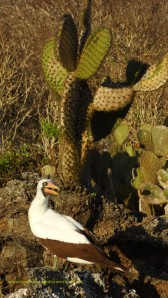 Galapagos Islands tours and travel