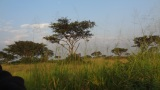 A taxi ride across the Ugandan savannah