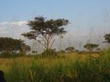 A taxi ride across the Ugandansavannah