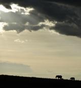 Safari at Masai Mara, Kenya (Fullday)