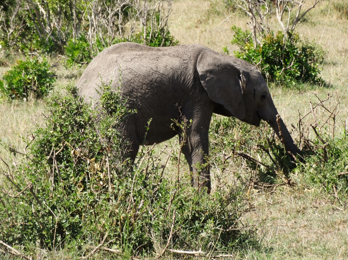 Elephants on the savannah with a baby (video)