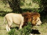 African safari from December 2013 (part2)